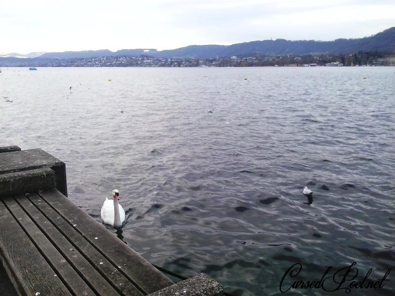 Zurich_2015_11